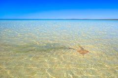 Shell Beach Shark Bay Fotografia Stock Libera da Diritti