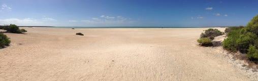 Shell Beach Shark Bay Panorama Immagine Stock