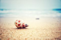 Shell. On the beach Stock Image