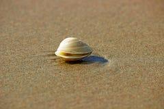 SHELL ON BEACH. This is shell on beach shot taken at koan maharashtra Stock Photography