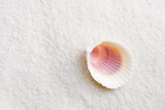 Shell on beach Stock Photos