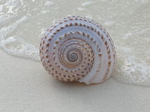 Shell on  the beach. Shell spiral on  the beach on  the sand Stock Photography