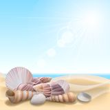 Shell on the beach Royalty Free Stock Images