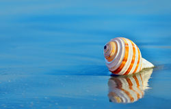 Shell on the beach. In summer time Royalty Free Stock Images
