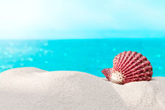Shell on the beach. Sun and holiday Royalty Free Stock Images