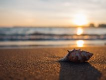 Shell on beach at sunset Royalty Free Stock Images