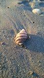 Shell beach stock photo