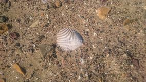 Shell in the beach texture. Shell texture in the beach in the sand with rocks Royalty Free Stock Images