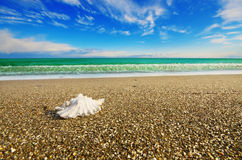 Shell on beach with tide at  background Royalty Free Stock Photo