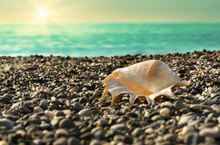 Shell on beach with tide at  background Stock Photography