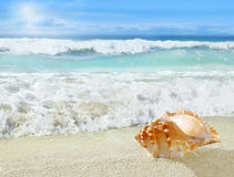 Shell on the beach. Royalty Free Stock Image