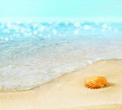 The shell on the beach. Royalty Free Stock Image