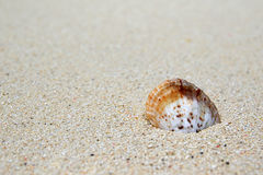 Shell on the beach of Ukulhas, Maldives Stock Photos