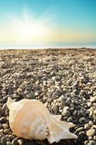 Shell on beach with tide at background Royalty Free Stock Photography