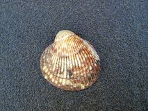 Shell on a beach of Vancouver Island Royalty Free Stock Photography