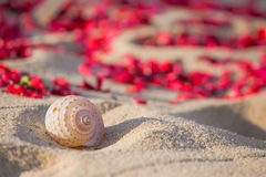 Shell on the beach. Wedding  setting Royalty Free Stock Image