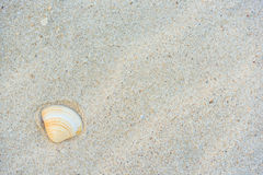 Shell on Beach. White Sand texture Royalty Free Stock Photos