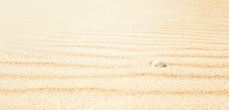 Shell on beach, wide Stock Images