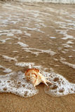 Shell on the beach1. Detail of shell on the beach Stock Images