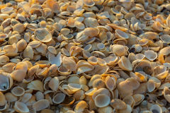 Shell beaches on the Sea of Azov. Karalar regional landscape park in Crimea. Stock Photos