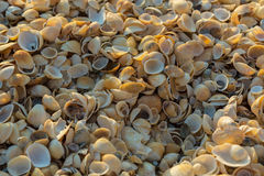 Shell beaches on the Sea of Azov. Karalar regional landscape park in Crimea. Stock Photography