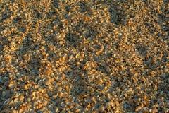 Shell beaches on the Sea of Azov. Karalar regional landscape park in Crimea. Royalty Free Stock Image