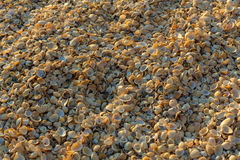 Shell beaches on the Sea of Azov. Karalar regional landscape park in Crimea. Stock Photo