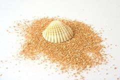 Shell on beachsand. Shell on orange beachsand ovar bright background Royalty Free Stock Image
