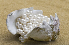 Shell with  beads Stock Photography