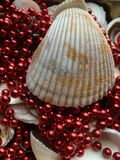 Shell and beads Stock Image