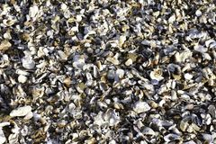 Shell Bed machacada costa este tropical natural, Uvongo, Suráfrica imagenes de archivo
