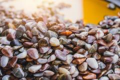 Shell-behoud van groenten in het zuur het zoute Thaise zeevruchten stock afbeelding