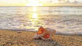 Shell bei Sonnenuntergang stockbild