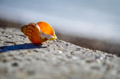Shell bij strand Stock Afbeeldingen