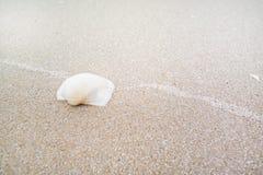 Shell blanc sur la plage de sable, Laem Talumphuk photo stock