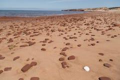 Shell blanco y rocas dispersadas en la playa de Cavendish Fotografía de archivo libre de regalías
