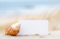 Shell and a blank card on the beach. Blank white card for your message and a shell on summer beach Stock Photo