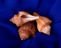 shell on blue background Stock Images