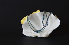 Shell with blue pearls and beads on black Stock Photos