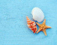 Shell. On a blue wooden background stock photography