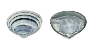 Shell on both sides. Photo of a shell on both sides Stock Photos