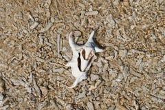 Shell branco cercado por corais inoperantes em uma praia coral foto de stock royalty free