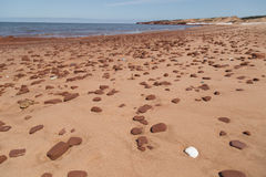 Shell branco e rochas dispersadas na praia de Cavendish Fotografia de Stock Royalty Free