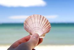 Shell and bright beautiful beach scene. Royalty Free Stock Images