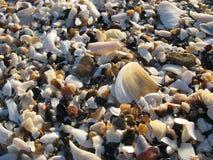 Shell stock photo