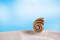 Shell brilhante do polymita na areia branca da praia sob a luz do sol Imagens de Stock Royalty Free