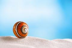 Shell brilhante do polymita na areia branca da praia sob a luz do sol Imagem de Stock