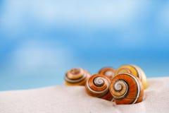 Shell brilhantes do polymita na areia branca da praia Fotos de Stock