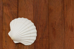Shell on brown background Royalty Free Stock Photo