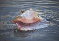 Shell brzeg zdjęcie royalty free